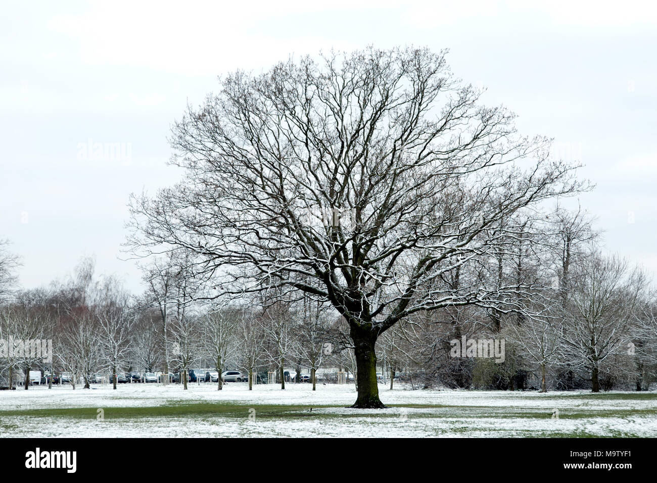 Tooting Common under a dust of snow - Stock Image