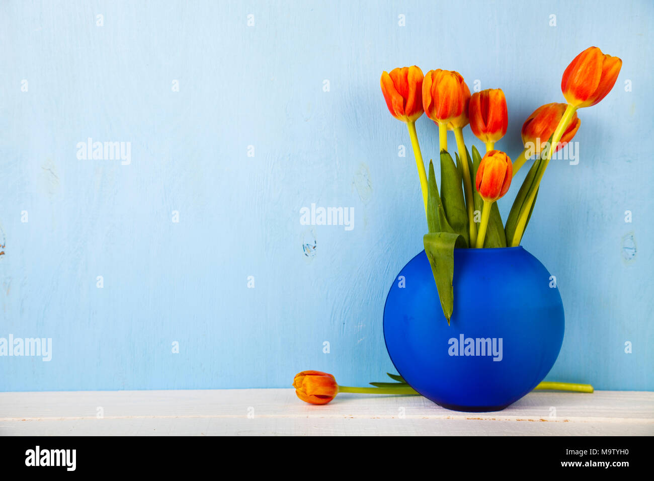 Tulips in a blue vase wooden background. Beautiful spring bouquet. - Stock Image