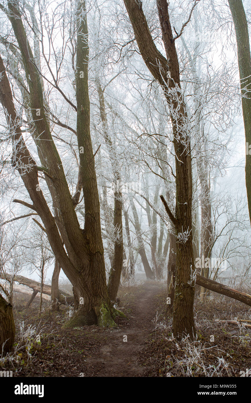 Frozen trees and fog on Park de Oeverlanden at the Nieuwe Meer in Amsterdam the Netherlands. - Stock Image