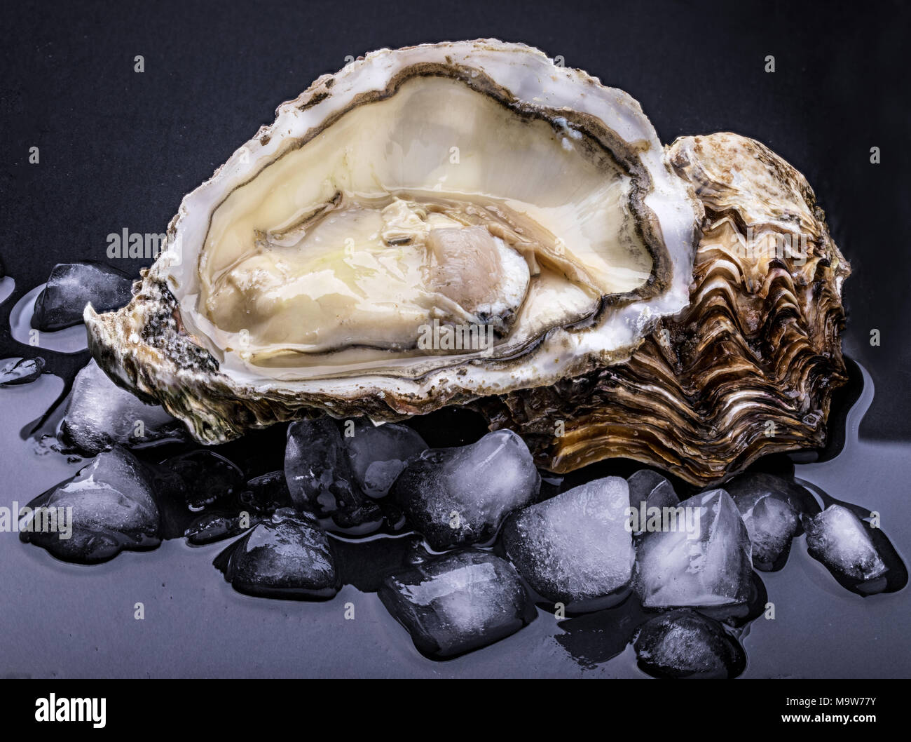 Fresh oyster isolated with shadow on dark background. Clipping path. - Stock Image