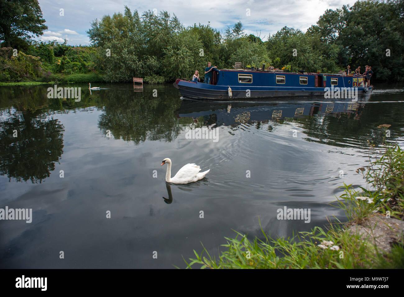 London. River Lee, Haringey. United Kingdom. - Stock Image