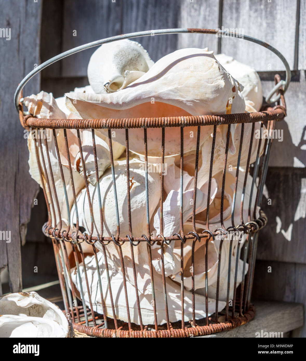 large wire basket holding assorted sea shells Stock Photo