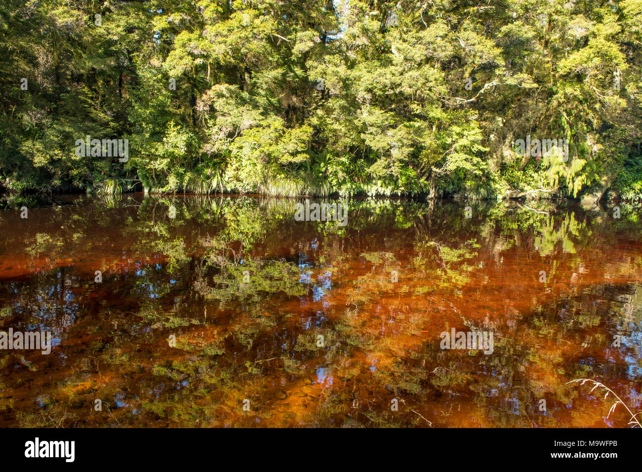 Tannin in Oparara River, Kahurangi National Park, South Island, New Zealand Stock Photo