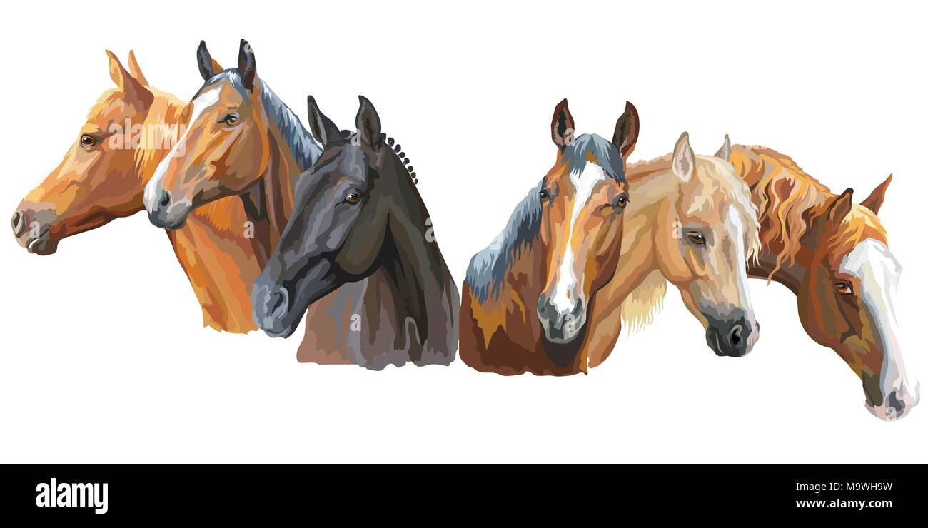 Set of colorful vector portraits of horses breeds (Trakehner horse, Welsh Pony, Appaloosa horse) isolated on white background - Stock Vector