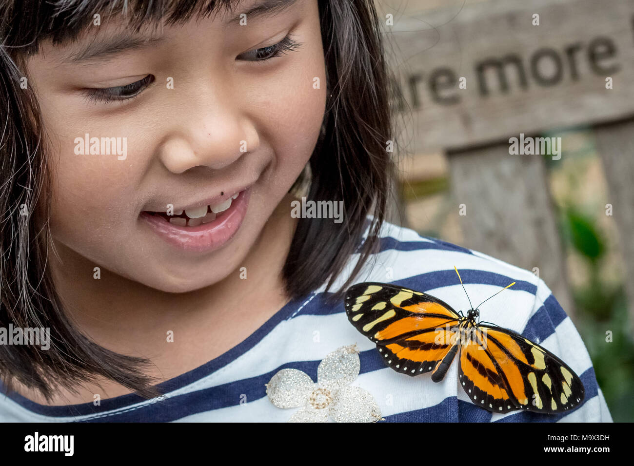 London, UK. 28th March, 2018. Live tropical butterflies fill the butterfly house for the returning 'Sensational Butterflies' exhibition at the Natural History Museum © Guy Corbishley/Alamy Live News - Stock Image