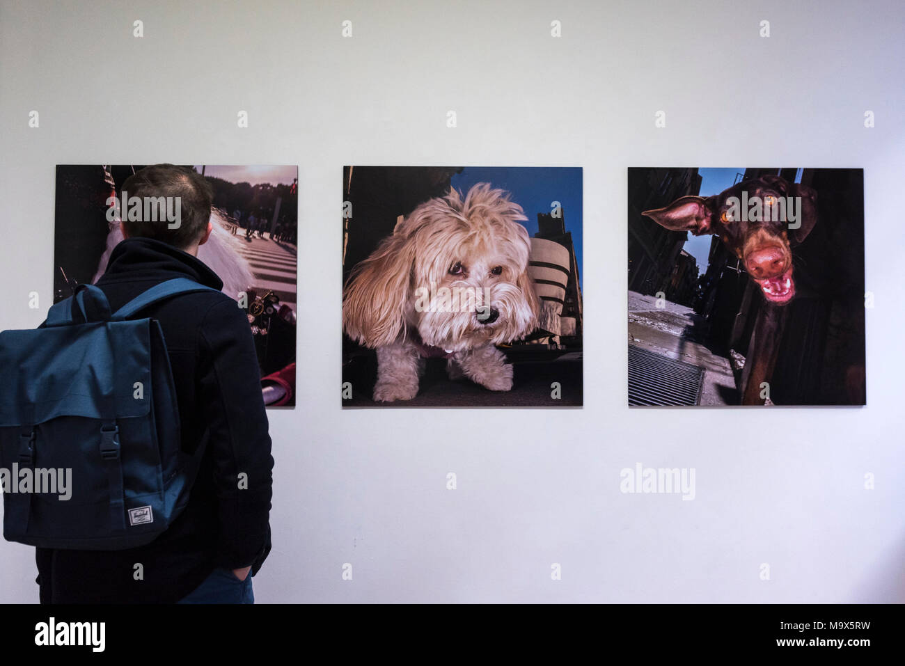 London, UK.  28 March 2018.  Visitors view works at the preview of 'The Series', an exhibition by Glaswegian street photographer Dougie Wallace at Bermondsey Project Space from 27 March to 14 April.  Works on display are from diverse subjects such as the mega-rich in Harrodsburg, Shoreditch, Blackpool as well as his latest project 'Well Heeled' a street photography book with dogs as the subject.  Credit: Stephen Chung / Alamy Live News - Stock Image