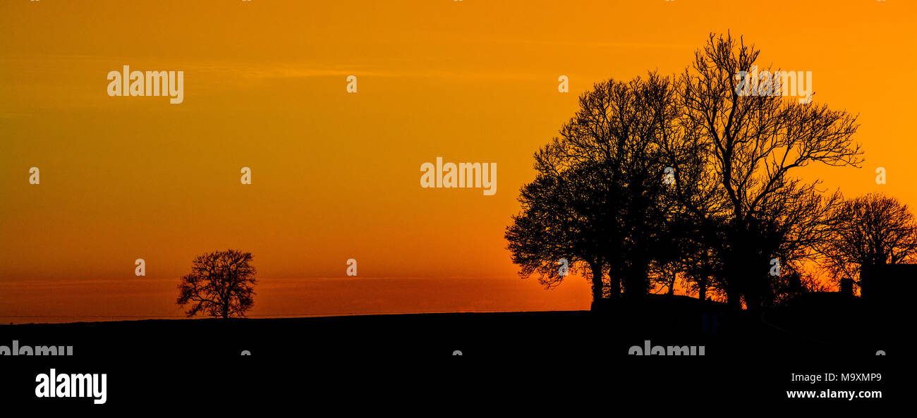 Sunset with tree silhouette, Stock Photo