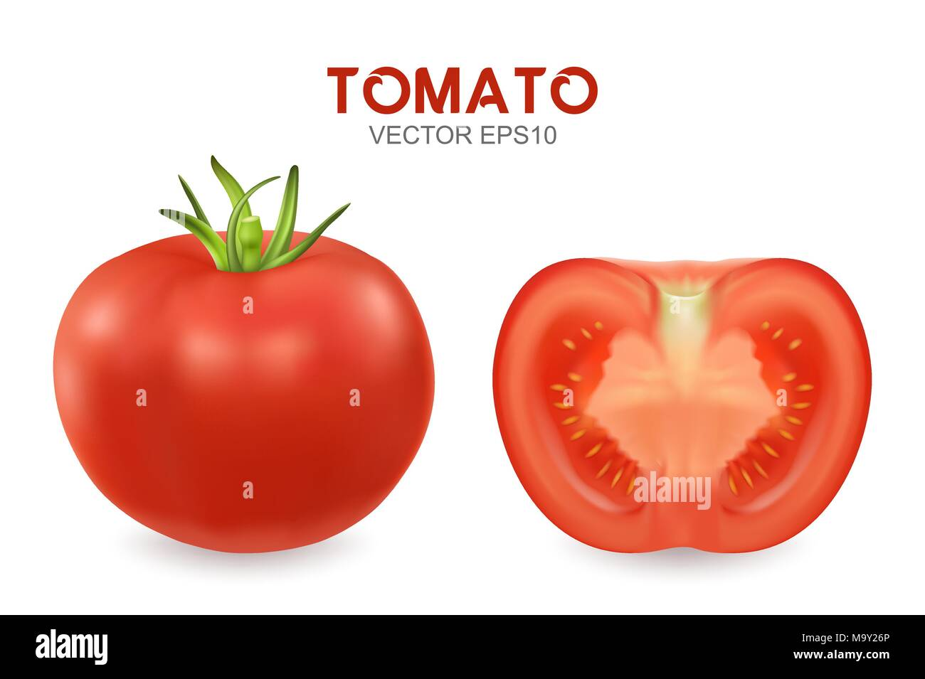 vector 3d realistic different tomato set closeup isolated on white