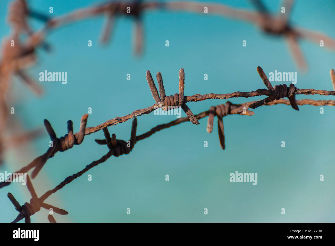 Fence fragment of old rusty barbed wire lines Stock Photo