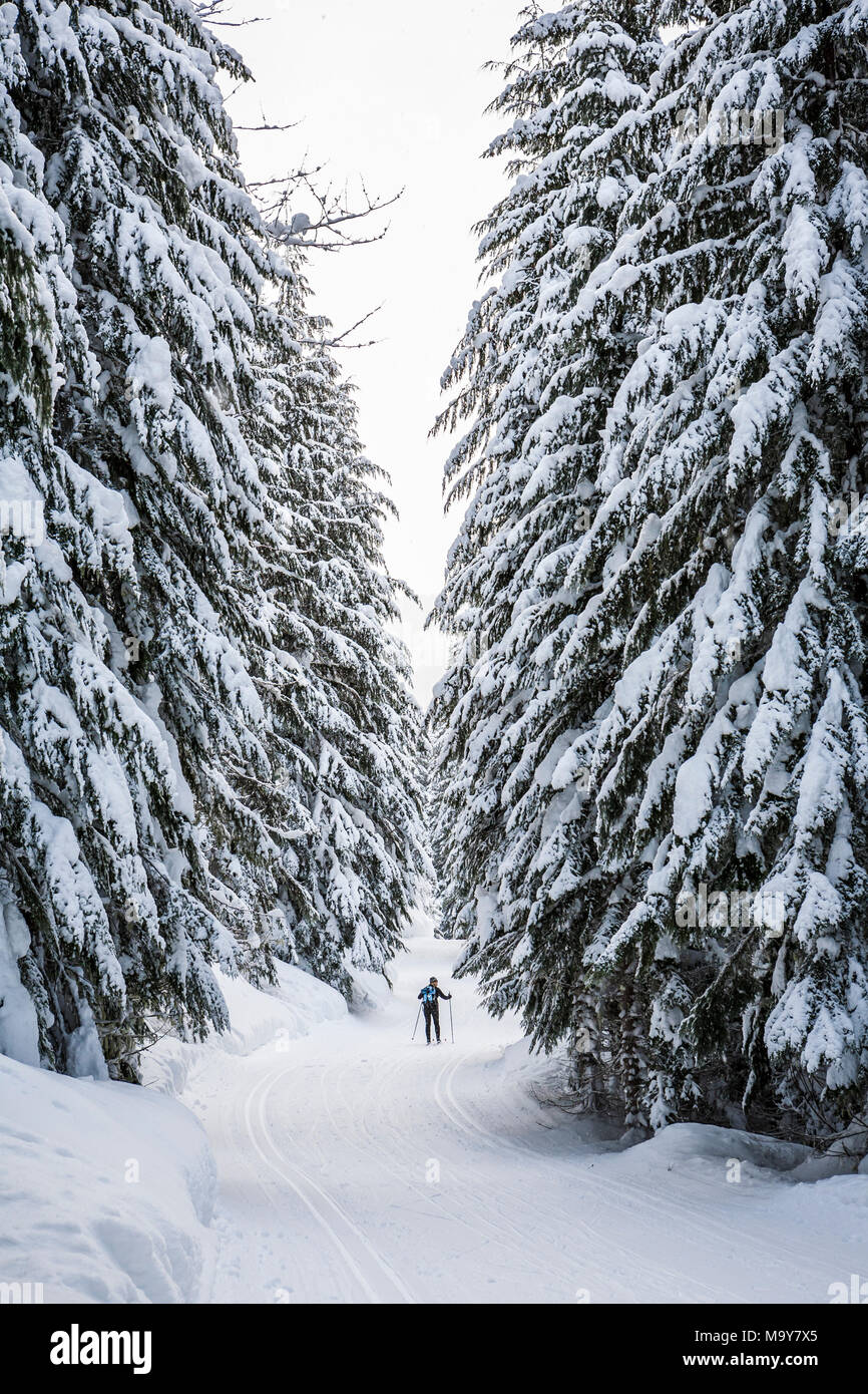 Cross country skier on a groomed trail. Stevens Pass Nordic center, Washington State, USA. - Stock Image