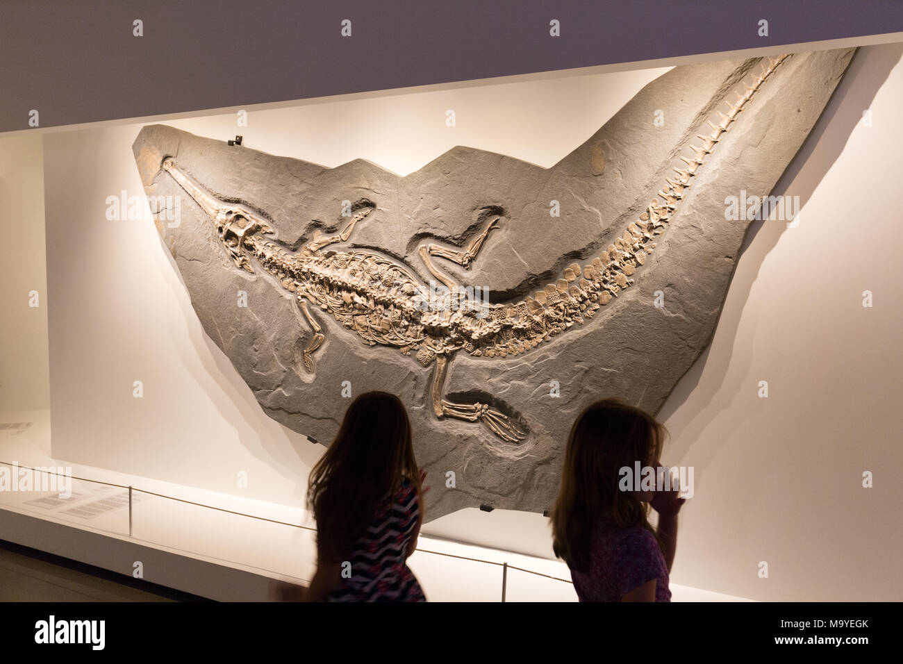 Children looking at a dinosaur fossil, Houston Museum of Natural Science, Houston, Texas USA - Stock Image