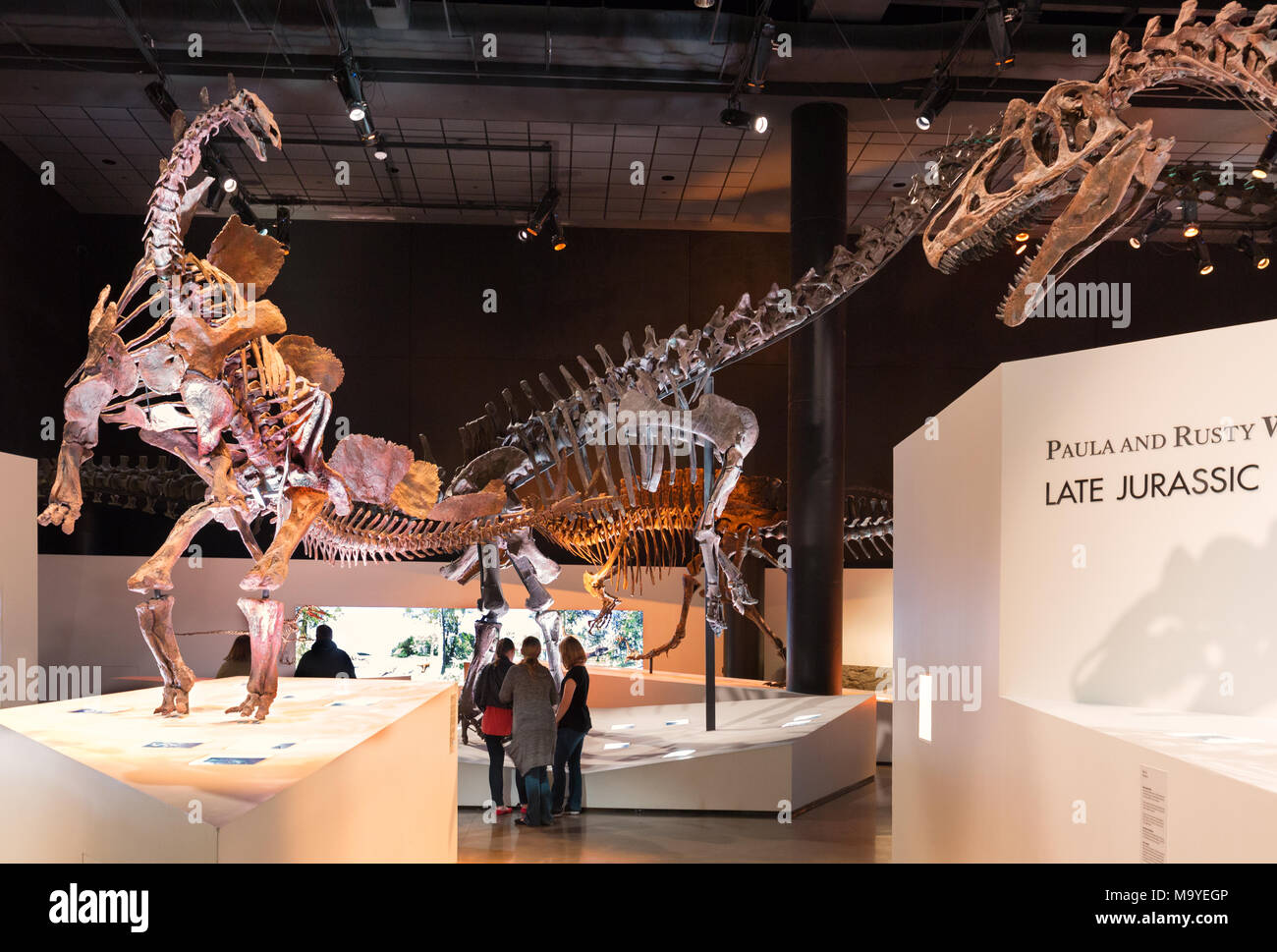 People looking at dinosaurs, dinosaur skeletons and dinosaur fossils in Houston Museum of Natural Science, Houston, Texas USA - Stock Image