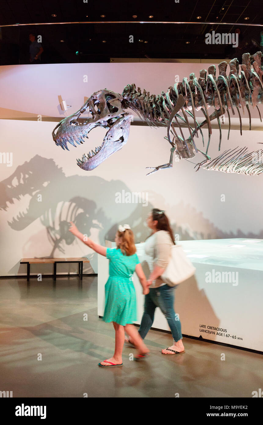 Mother and child looking at a T Rex fossil of the tyrannosaurus Rex dinosaur, Houston Museum of Natural Science, Houston, Texas USA - Stock Image