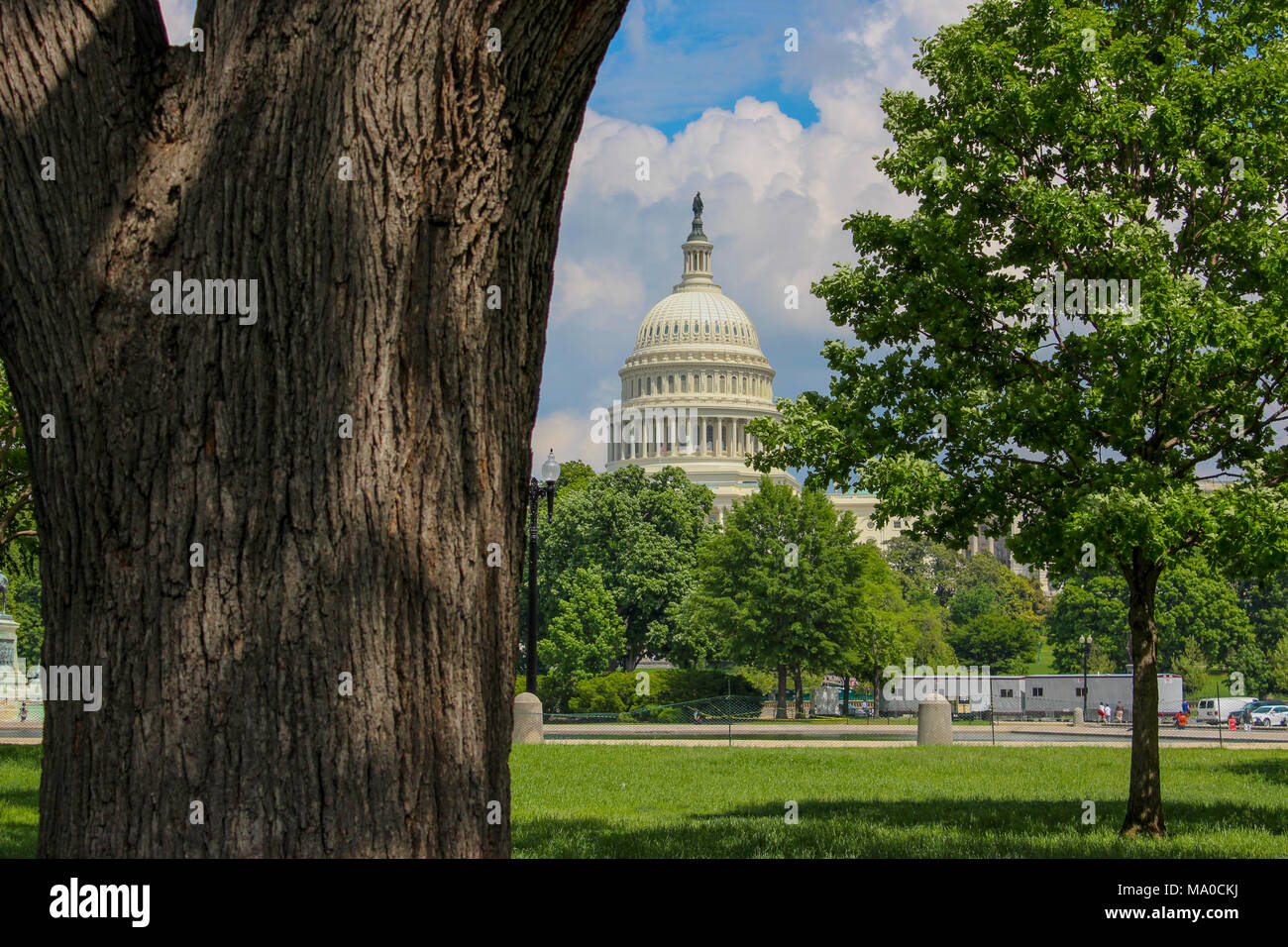 Capitol in Washington DC, view from behind a tree, blue sky