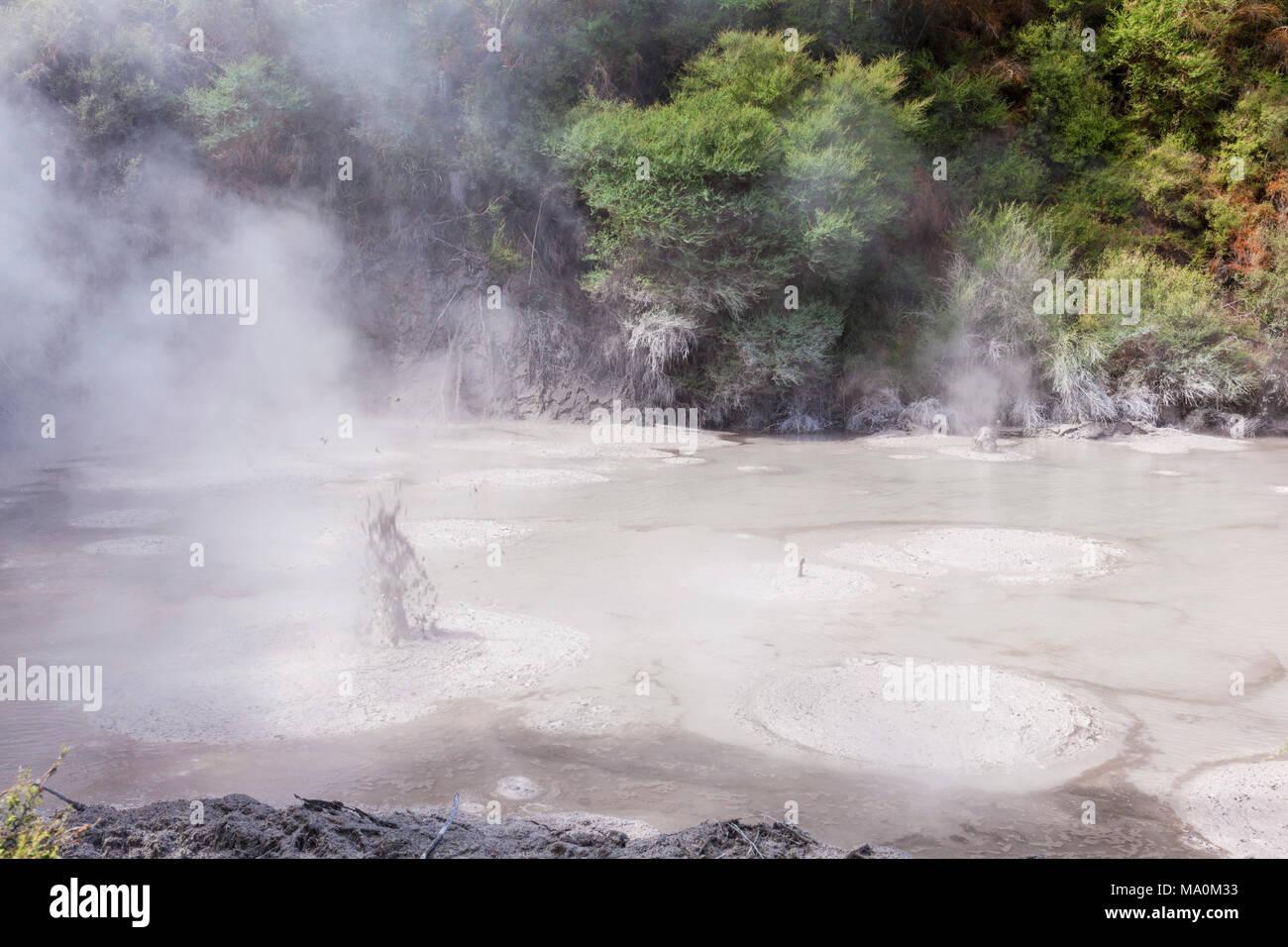 new zealand wai-o-tapu themal wonderland boiling bubbling mud pools mud pots waiotapu rotorua new zealand waiotapu rotorua new zealand - Stock Image