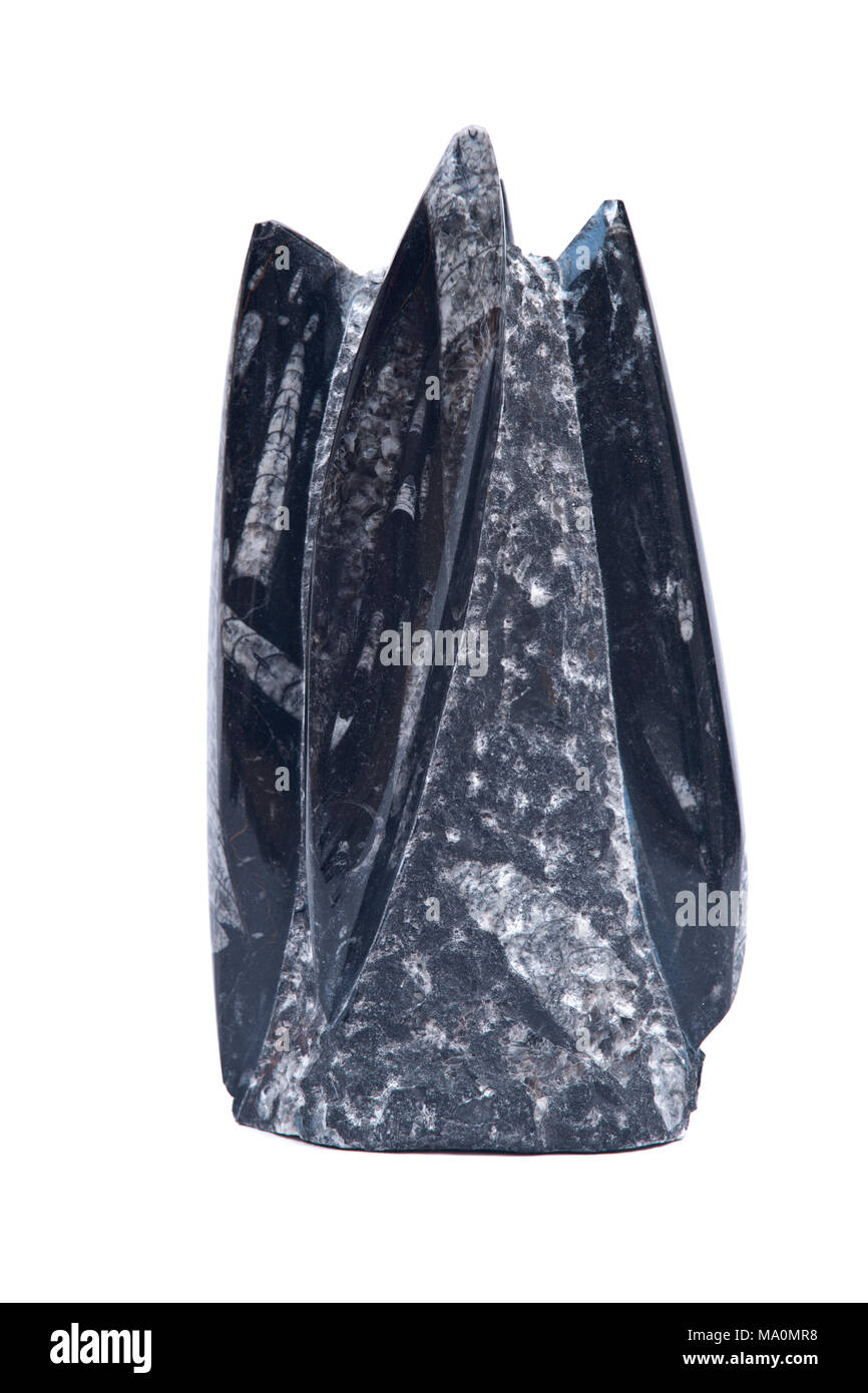 Huge orthoceras fossil sculpture in black marble isolated on white background - Stock Image