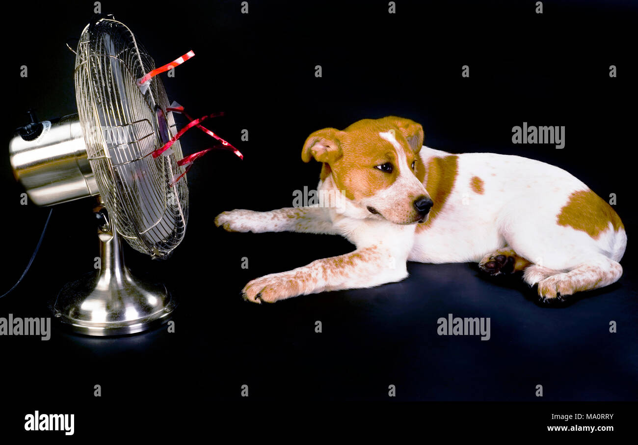 Puppy having a dog day and staying cool. - Stock Image