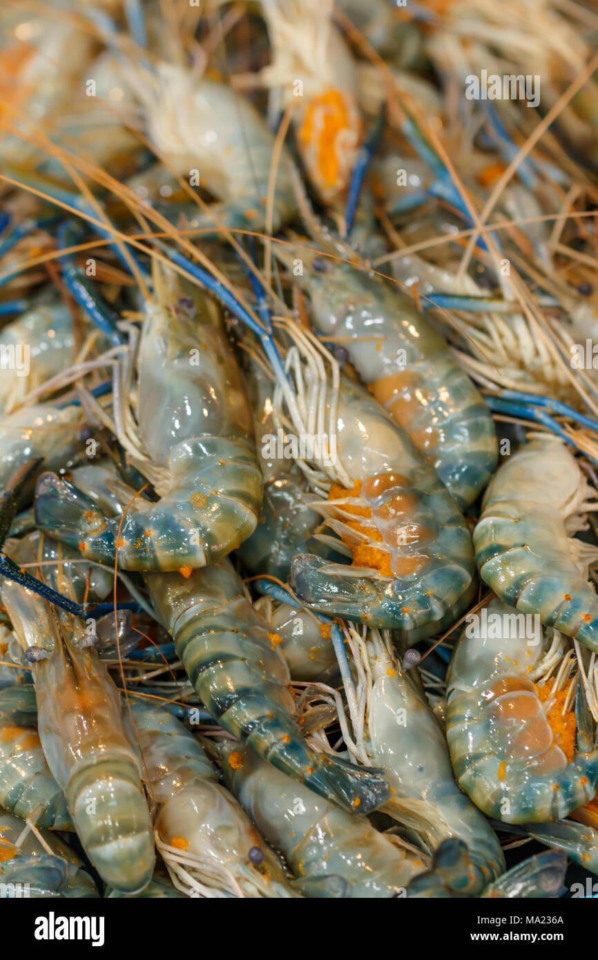 Aquaculture of Texas