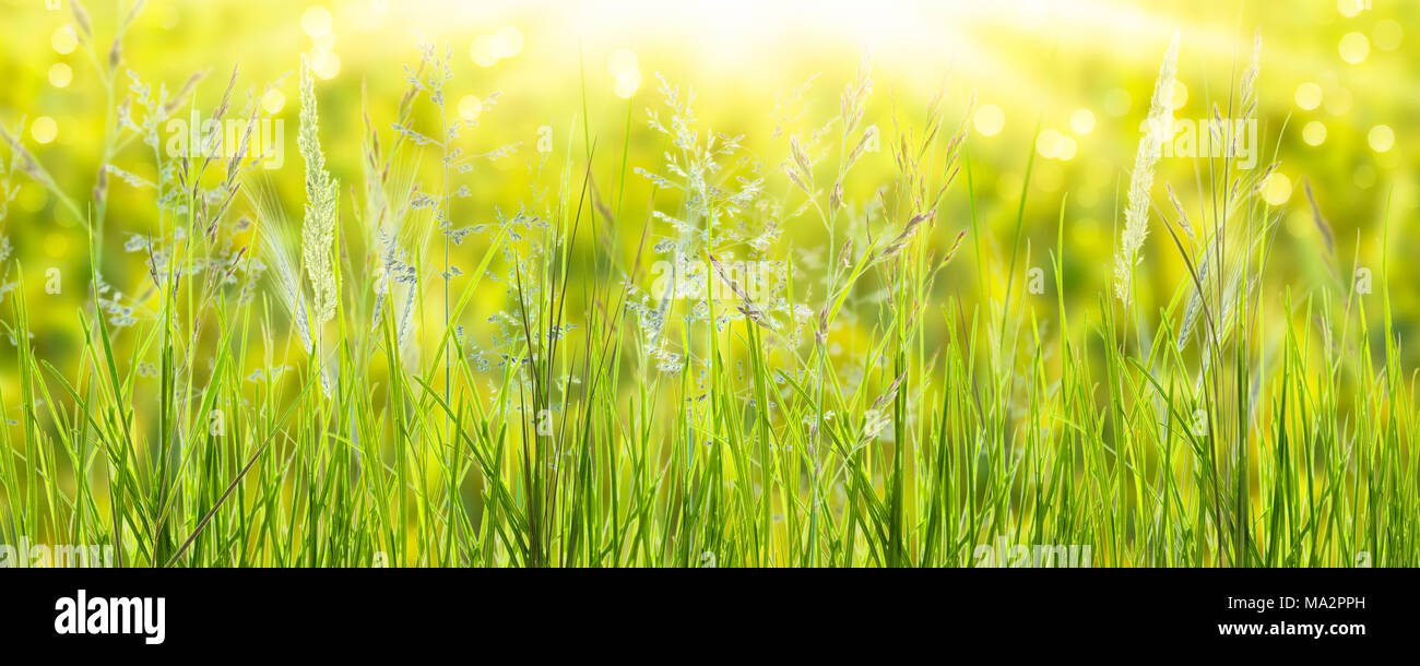 sunshine on blades of grass in meadow - Stock Image
