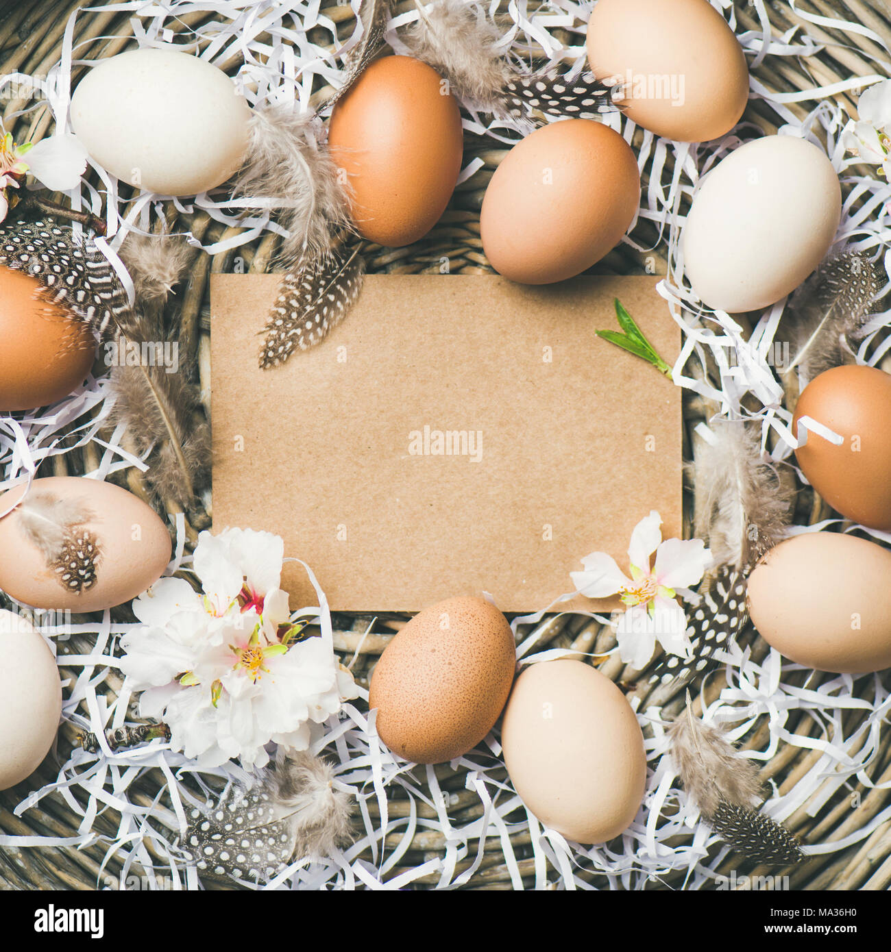 Natural colored eggs for Easter in basket, square crop - Stock Image