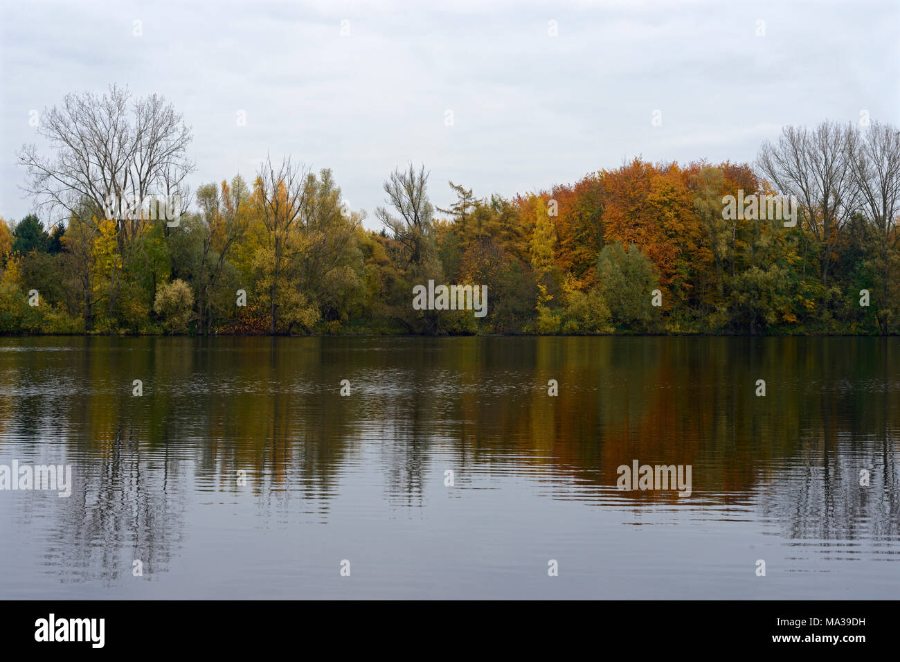 Bislicher Insel / Bislicher Island, Lower Rhine area, North-Rhine Westfalia, Germany, backwater in autumn. - Stock Image