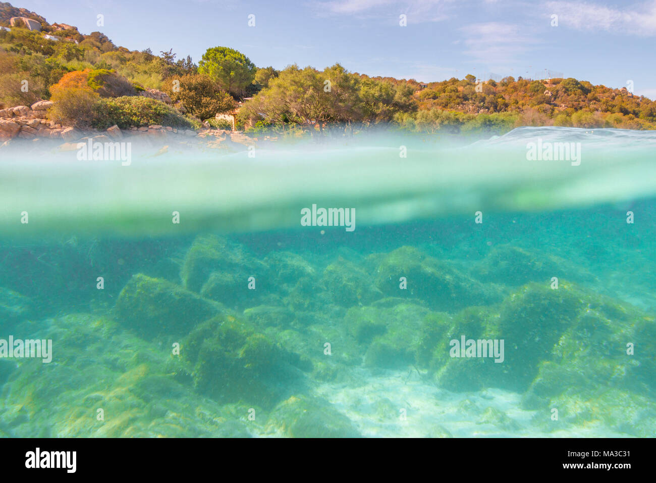 Half underwater photo with the sea bed and trees in arinella (Olbia), Olbia-Tempio province, Sardinia district, Italy Stock Photo