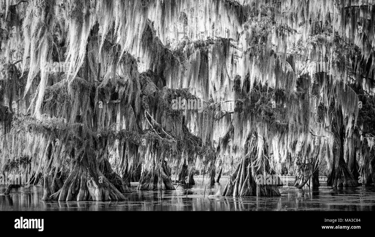 Lake Martin, Breaux Bridge, Atchafalaya Basin, Southern United States, USA; North America - Stock Image