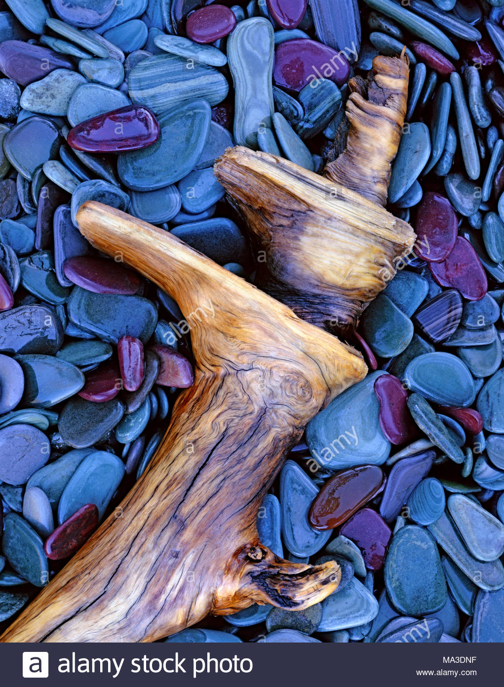 Stones and Driftwood after rain on the Shore of St. Mary Lake, Glacier National Park, Montana - Stock Image