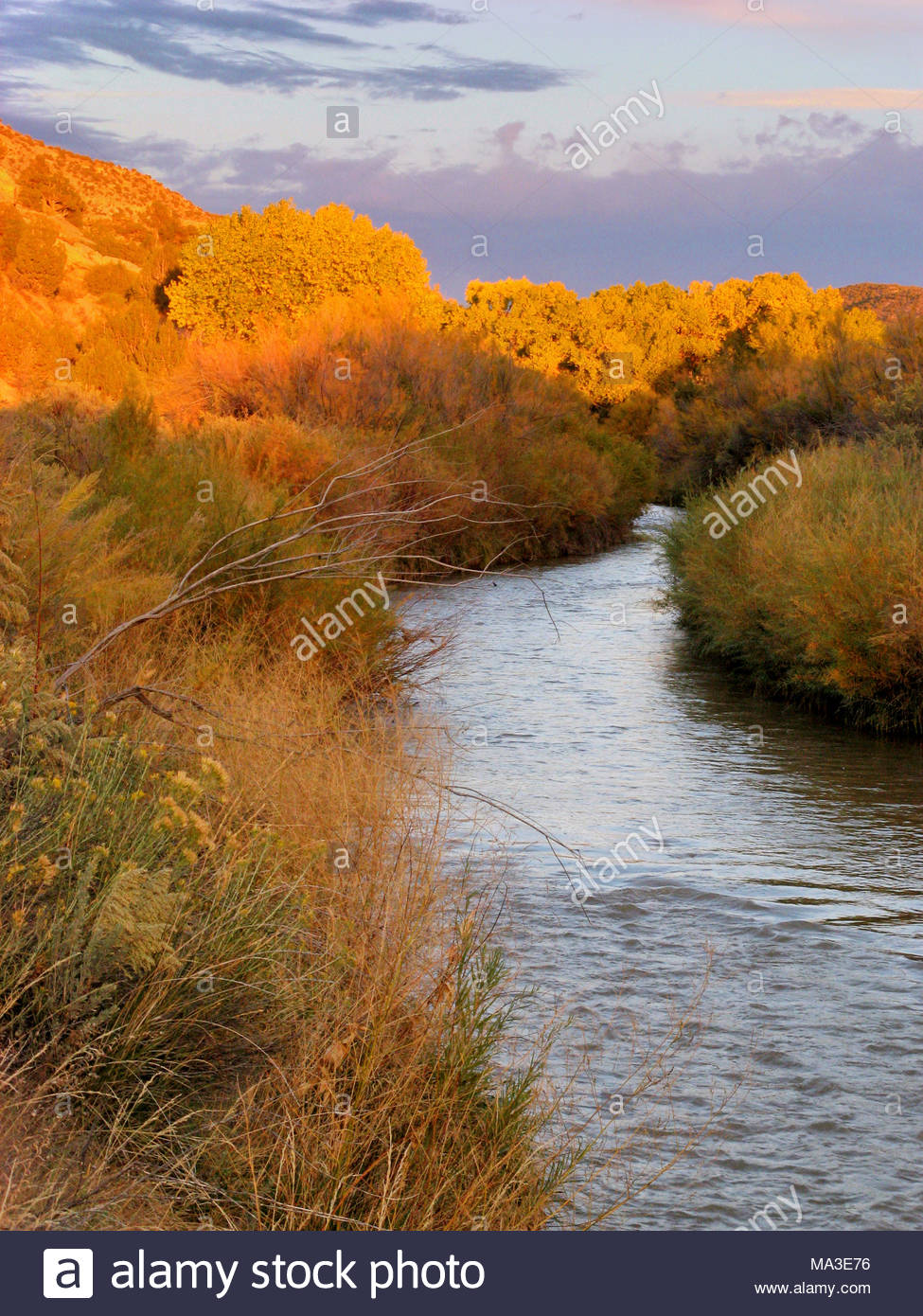 McElmo Creek and Fall Color, Montezuma County, Colorado - Stock Image