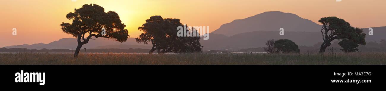 Cork oaks at sunrise, Murta Maria, near Olbia, East sardinia, Sardinia, Italy, Europe, - Stock Image