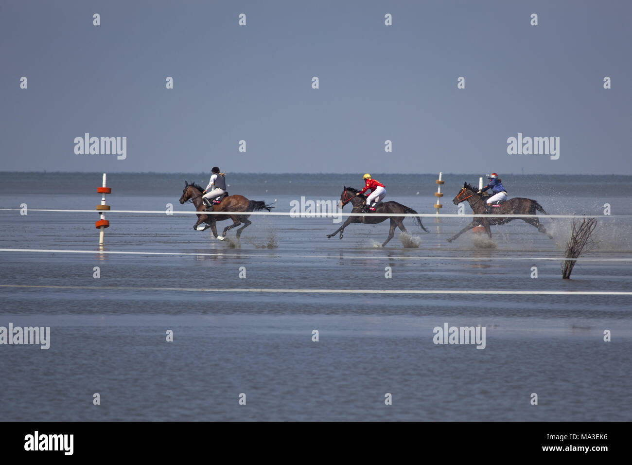 Duhner mudflat races, Duhnen, Cuxhaven, Lower Saxony, Germany, Europe, - Stock Image