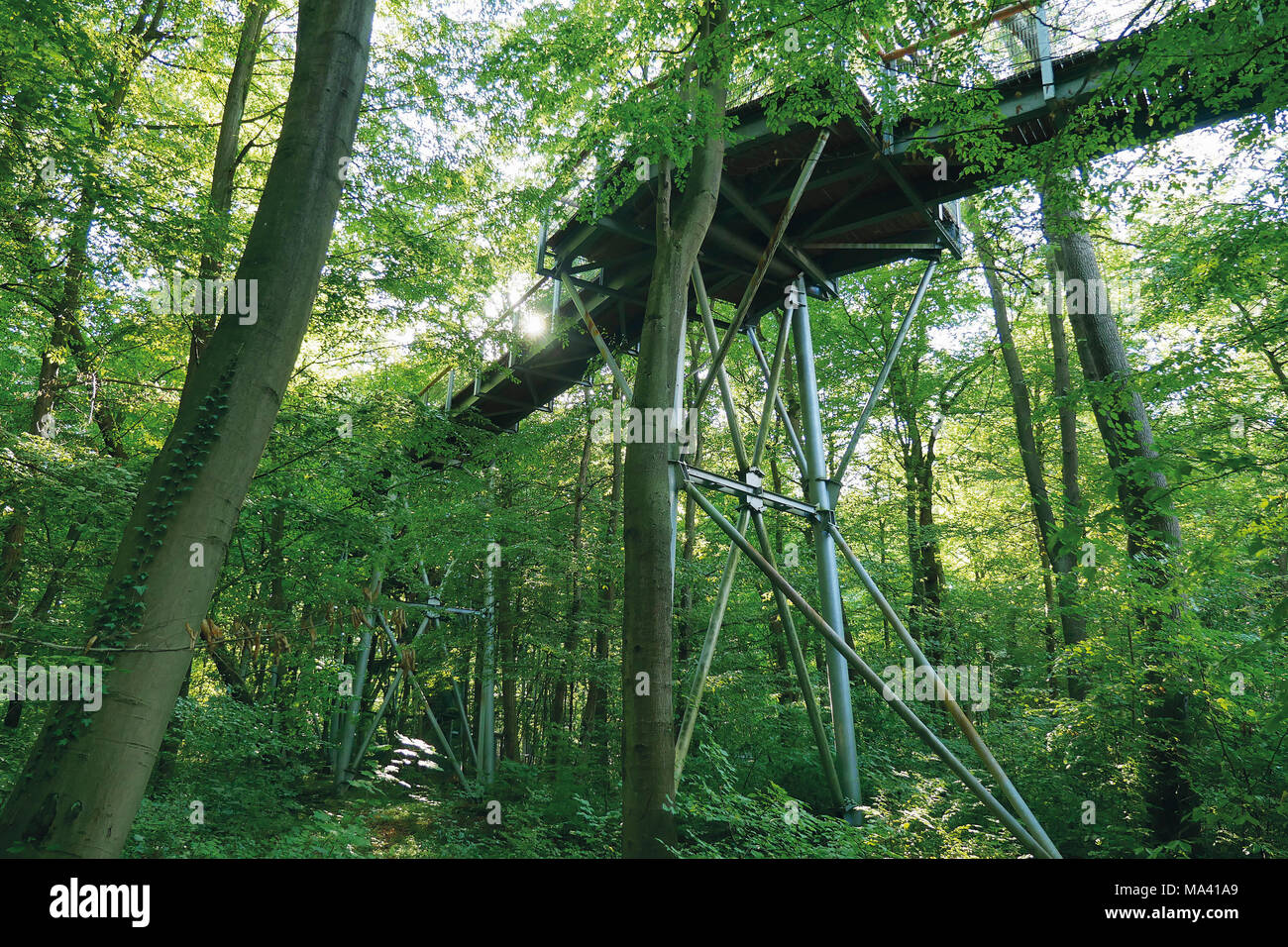 The treetop walkway in the Hainich National Park through the beech tree in Thuringia, Germany Stock Photo