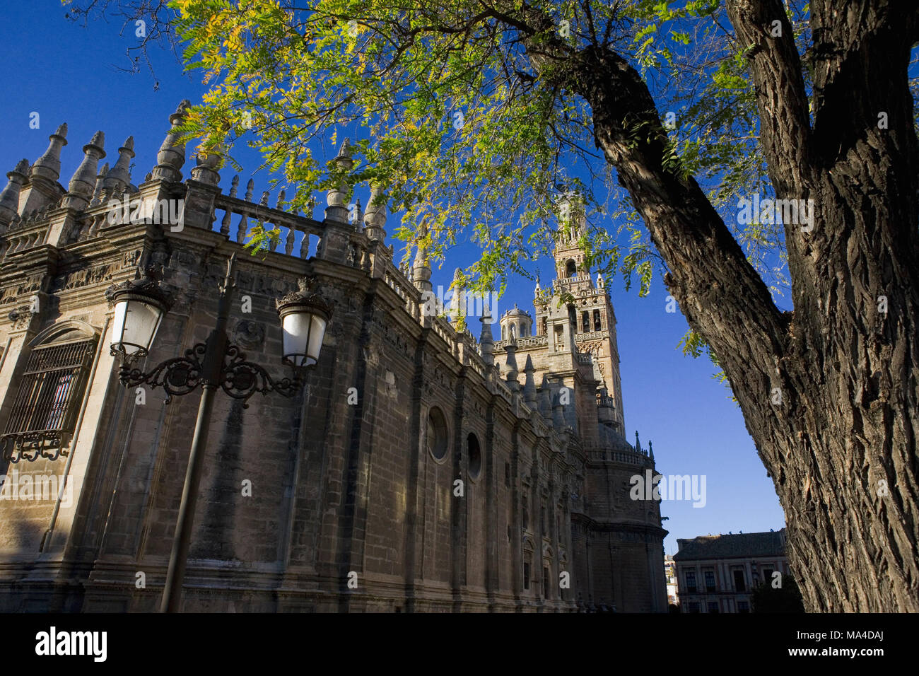 top ten largest cathedrals in the world