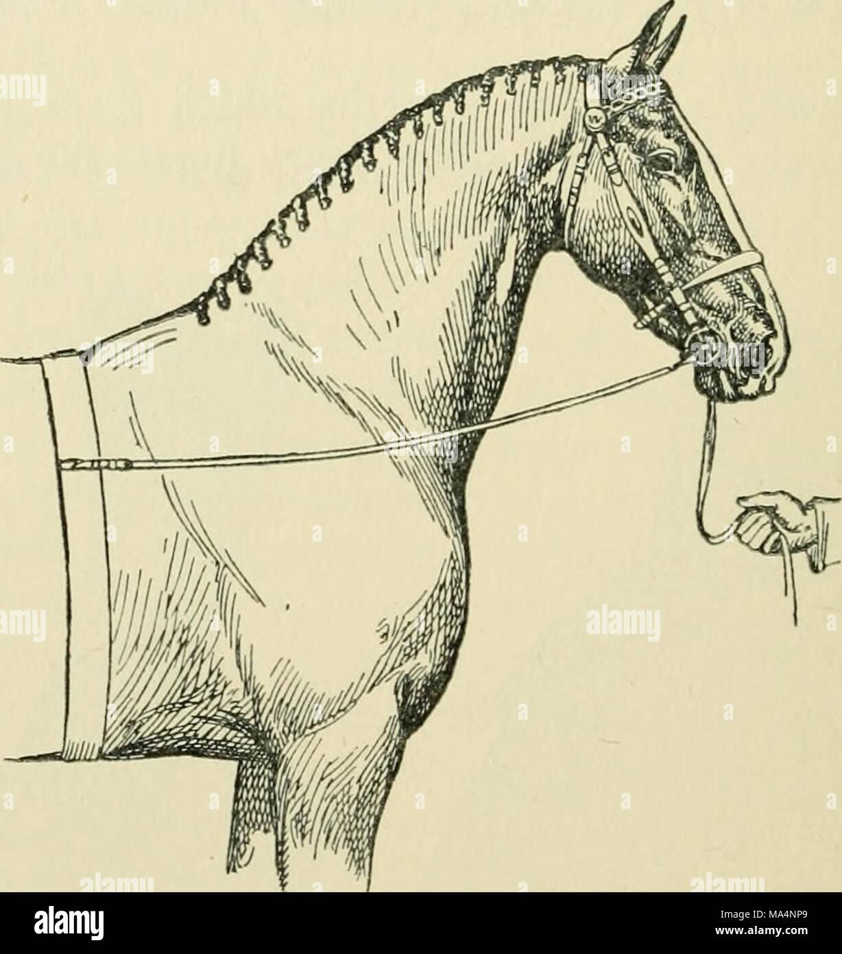 Único Equine Anatomy And Physiology Foto - Anatomía de Las ...