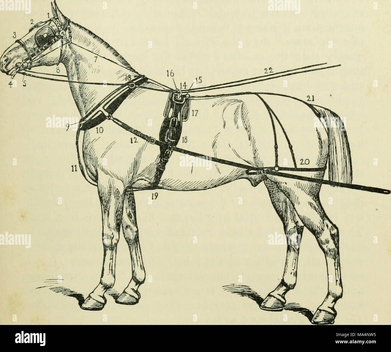 Excelente Horse Hoof Anatomy And Physiology Colección de Imágenes ...