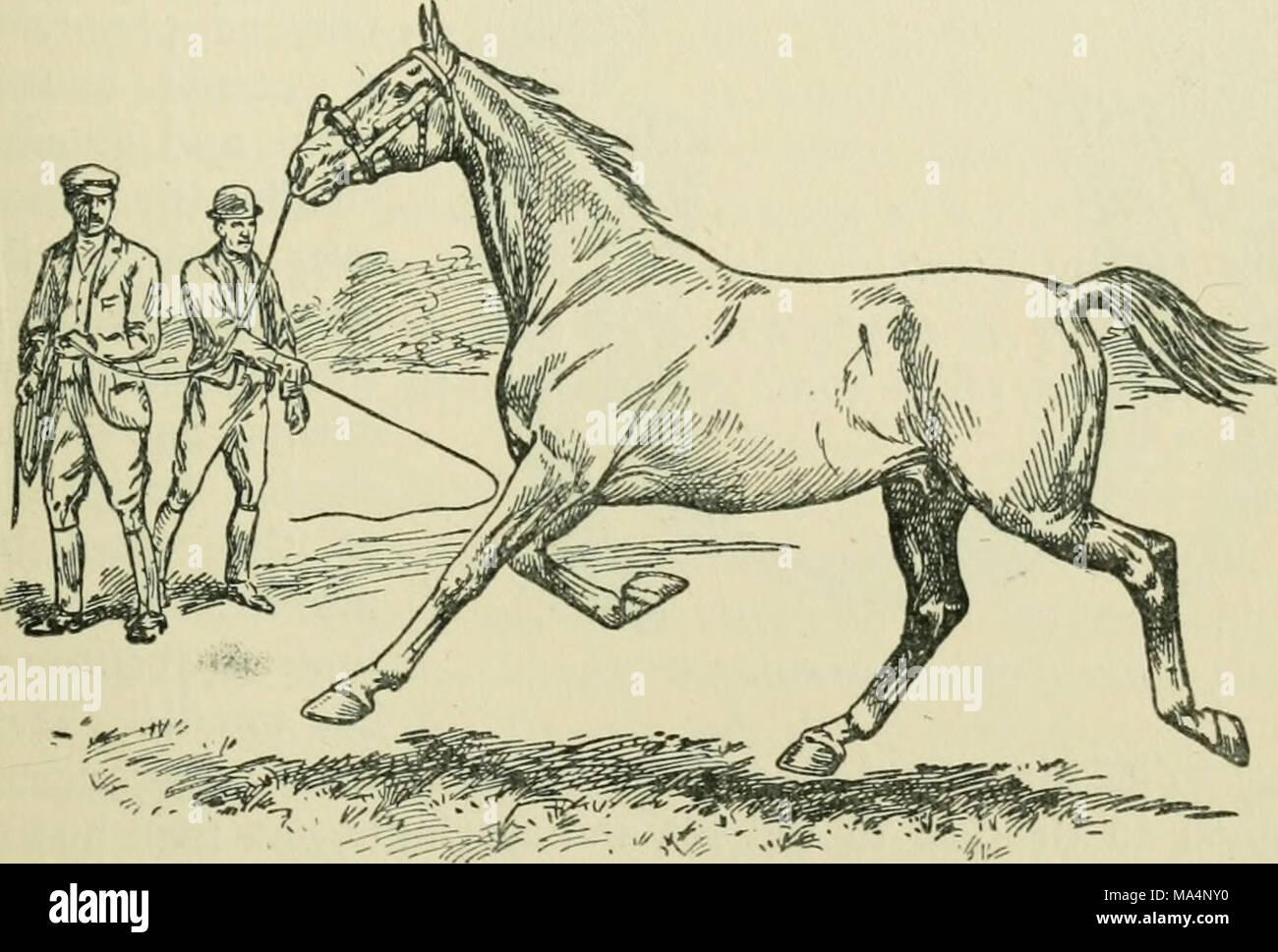 Schön Horse Hoof Anatomy And Physiology Ideen - Menschliche Anatomie ...
