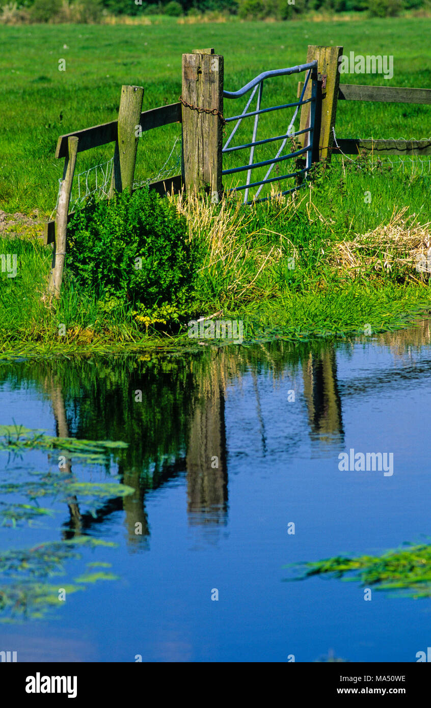 Nash & Goldcliff SSI, Ancient Grazing Marsh, Gwent Levels, Gwent, Wales, UK. - Stock Image