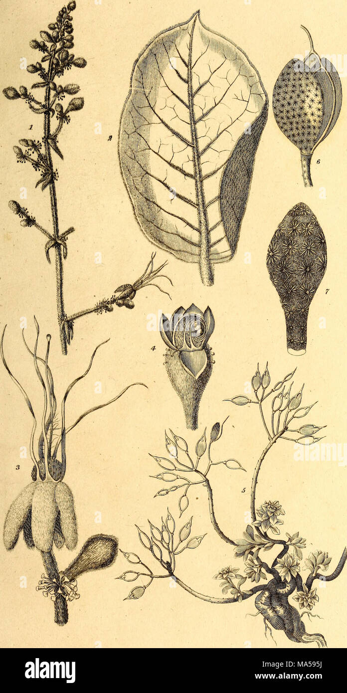 Elements of the philosophy of plants : containing the principles of ...