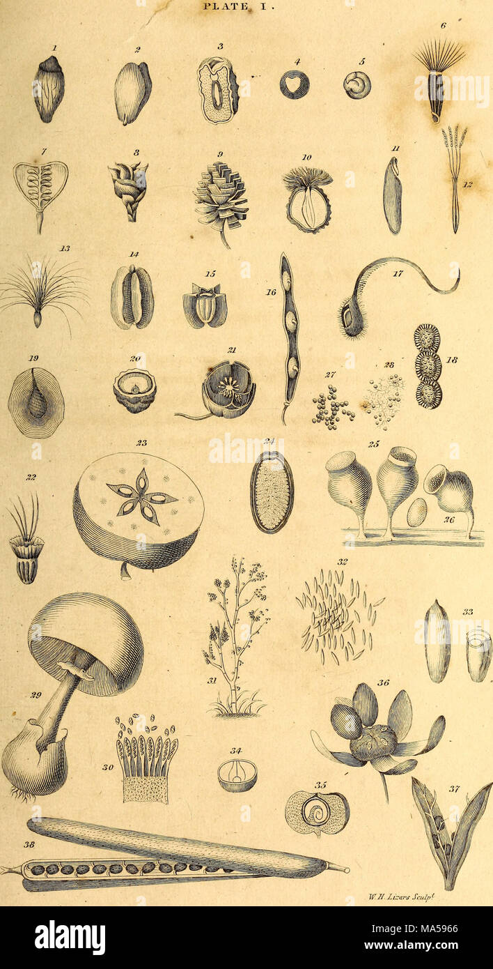 Elements Of The Philosophy Of Plants Containing The Principles Of