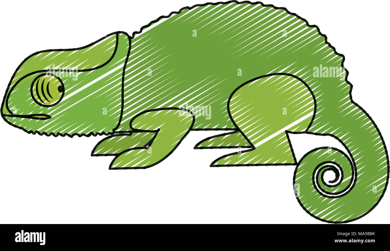 doodle nature chameleon animal with exotic skin - Stock Vector