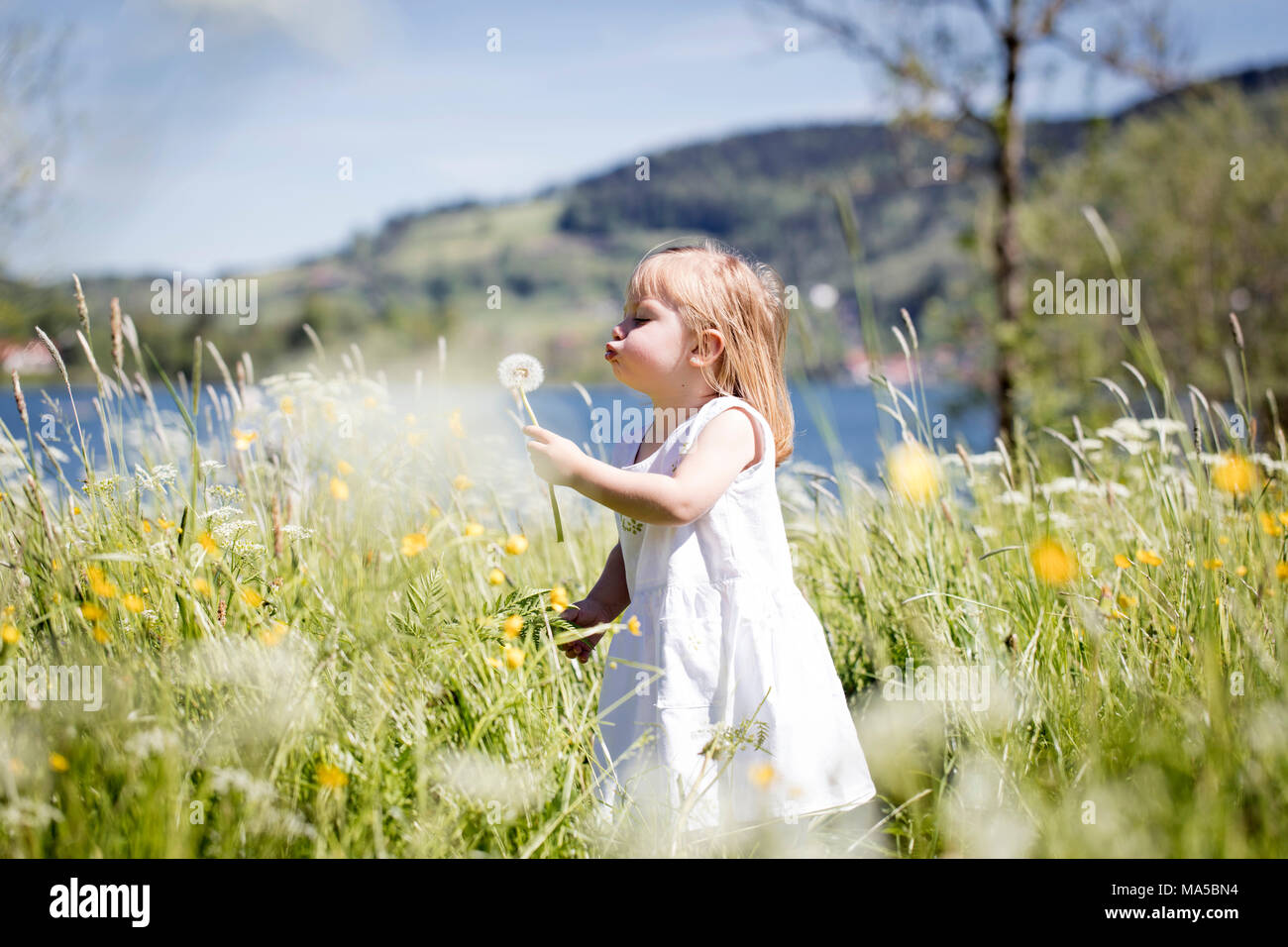 Mother and child on a flowering meadow, the child picks flowers - Stock Image