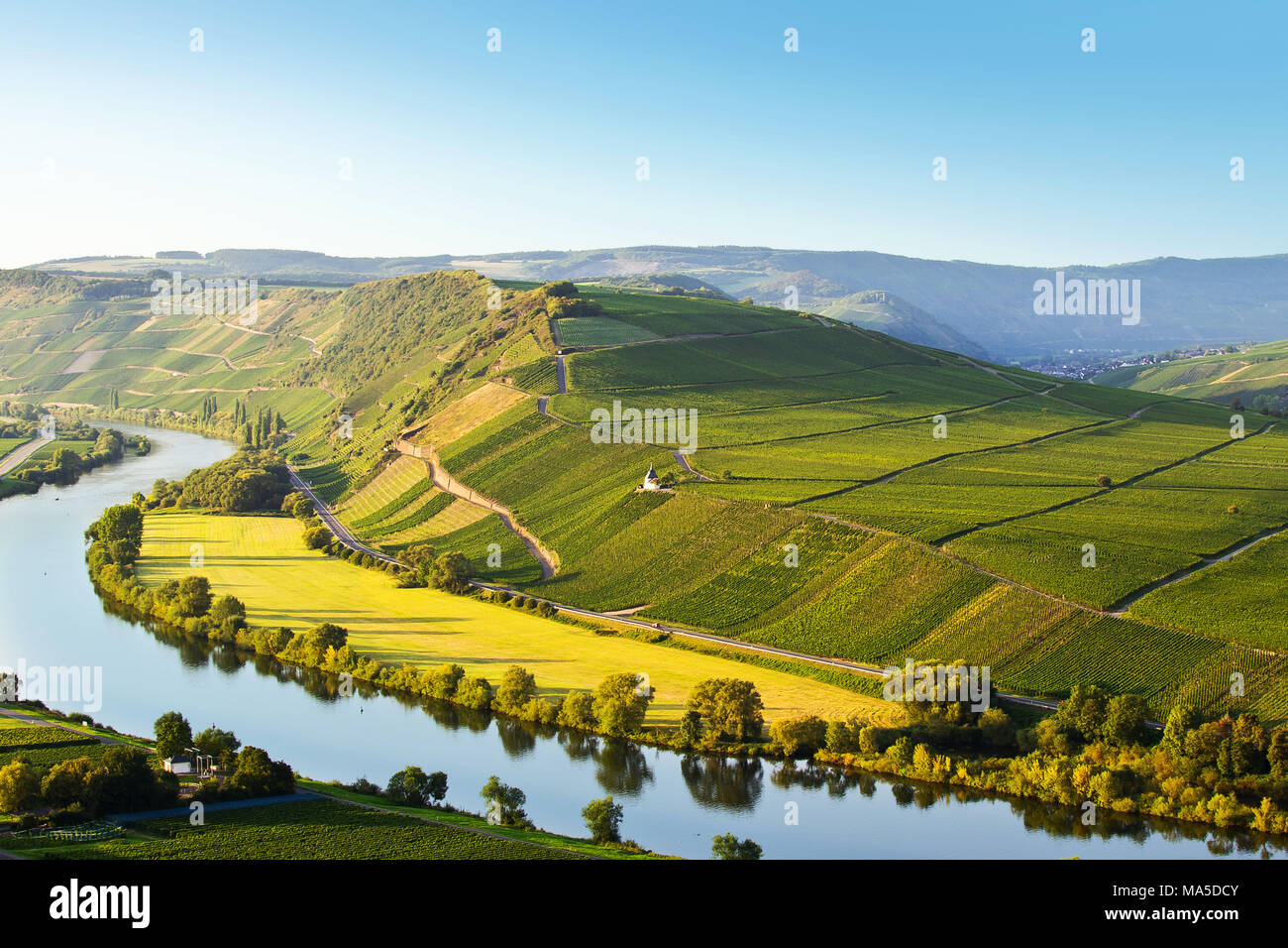 view to the Moselle and the vineyards behind it, in the summer, close Trittenheim with a cloudless sky. - Stock Image