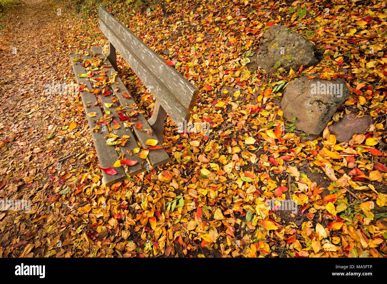 an emotional snapshot of the autumn with a bench and a carpet of coloured leaves, Bolzano province, South Tyrol, Trentino Alto Adige, Italy - Stock Image