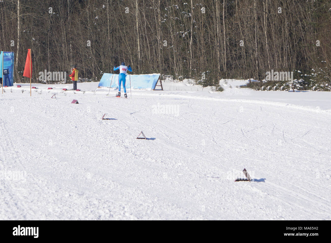 Cross-country skiing in the forest sprint approach - Stock Image