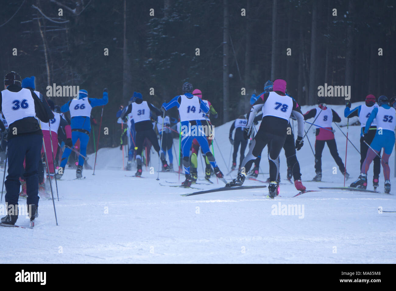Participants of traditional mass skiing competitions at long and short distances - Stock Image