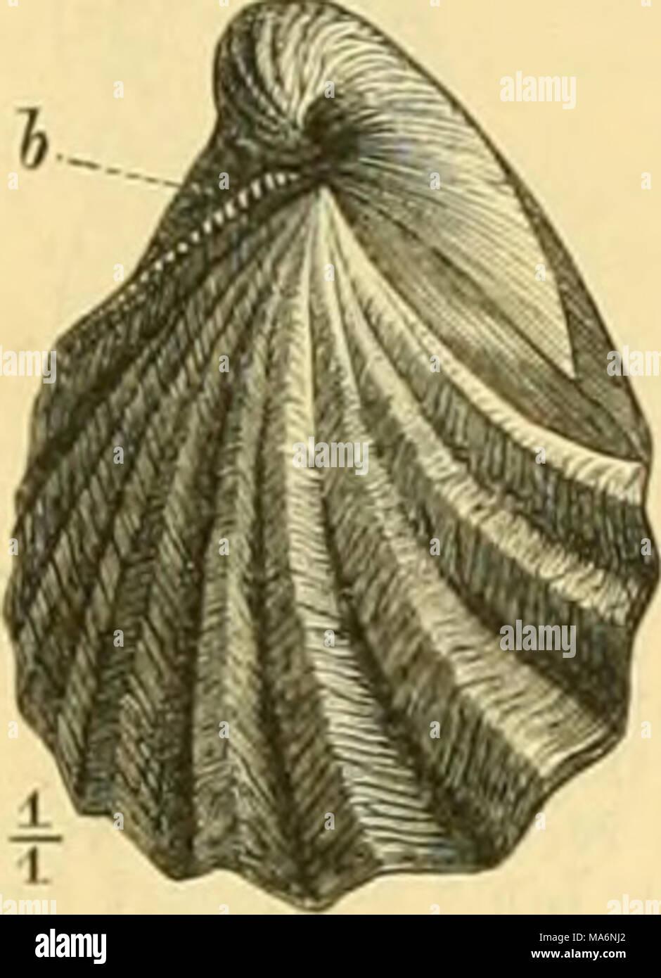 . Elemente der paläontologie bearbeitet - Stock Image