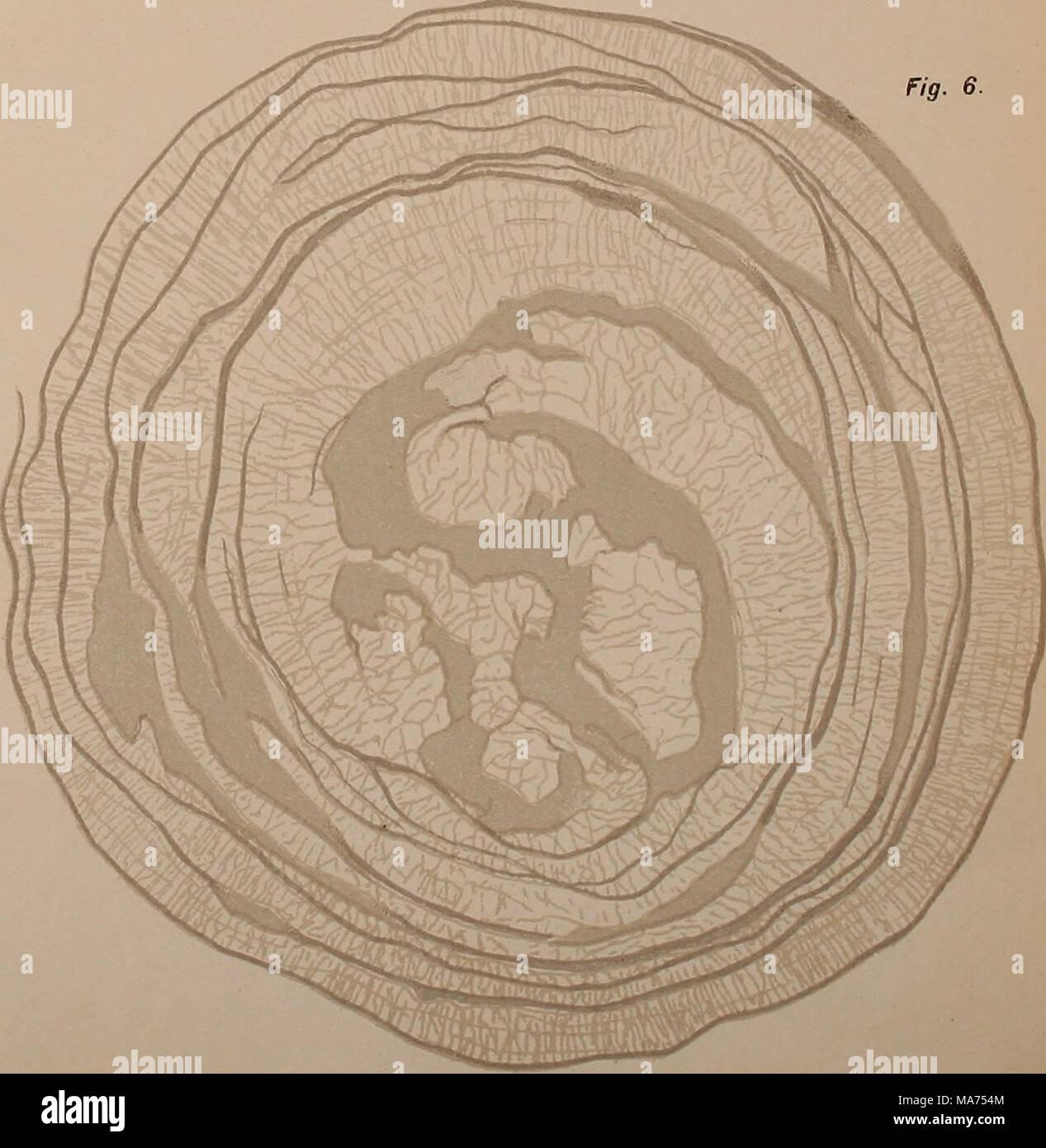 . Eerste ontwikkelingsstadiÃ«n van Megalobatrachus maximus Schlegel . fi^- I, III, V, VI Mej. J.Mételeekamp, del., fig- II en IV L. Â¥â de Bus3ï. del LHh. .1. H. 1»; Br; - Stock Image