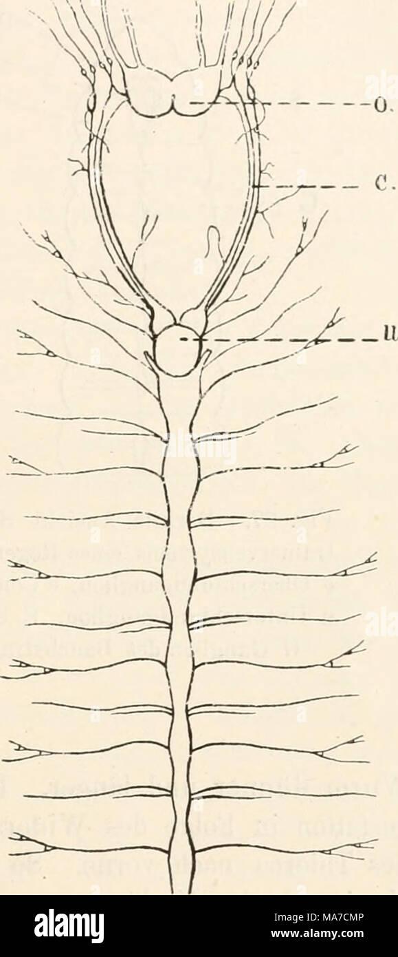 Ziemlich Regenwurm äußere Anatomie Bilder - Menschliche Anatomie ...