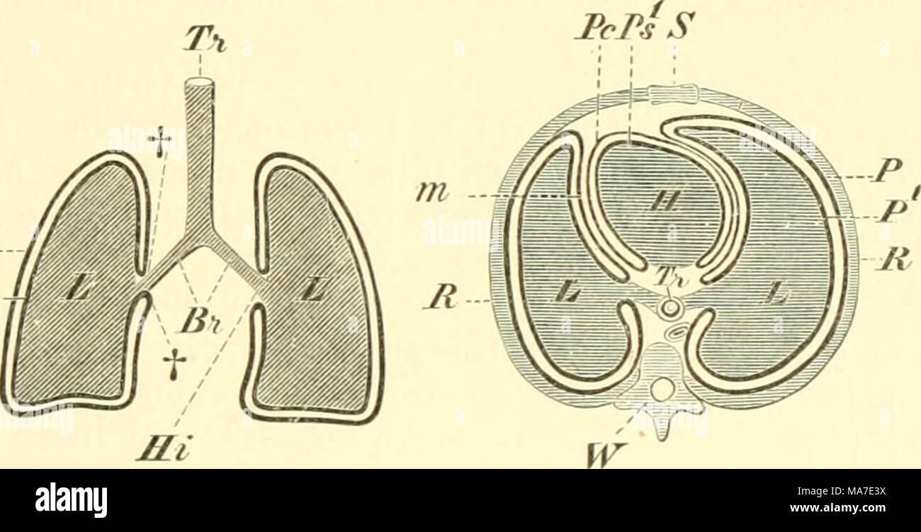 Einführung in die vergleichende Anatomie der Wirbeltiere, für ...