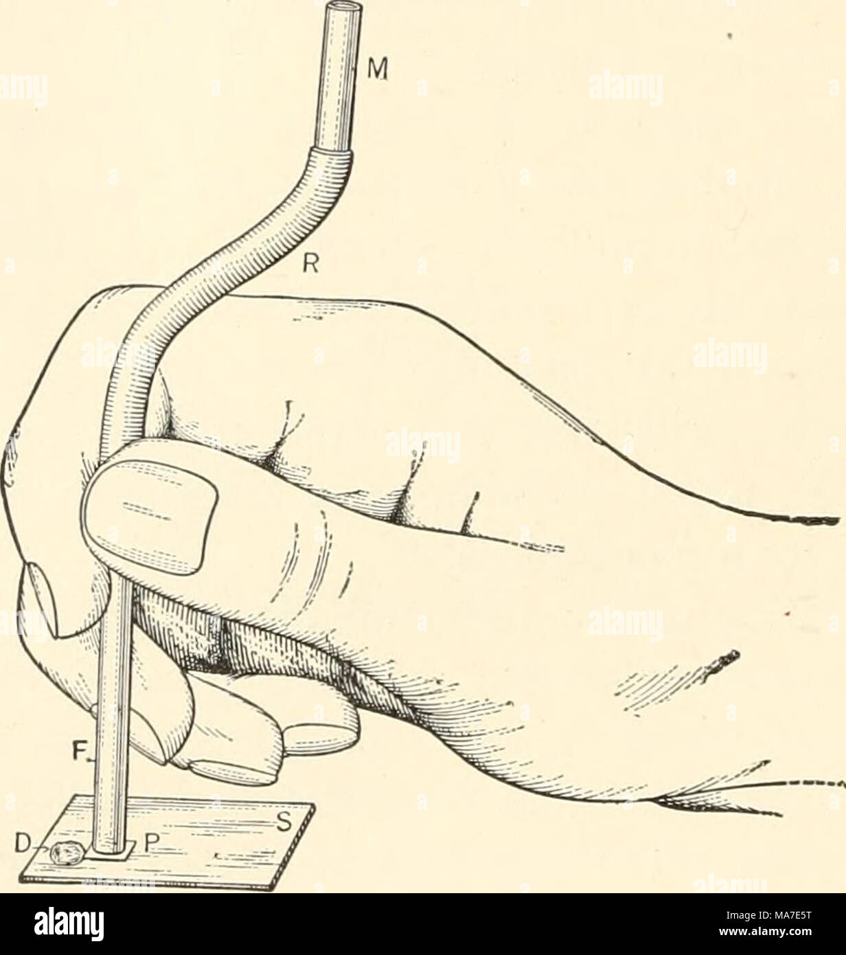 . Elementary chemical microscopy . Fig. 149. Behrens Method of Filtration. A little practice is required in order to apply the proper pressure of the glass tube upon the filter paper and to maintain this pressure uniformly without tipping the tube out of its vertical position. The chief difficulties encountered in rapid work are: (1) The danger of carrying the filtrate up into the mouth or into the rubber tube by air bubbles, which are always drawn into the tube when the liquid to be filtered has all been absorbed by the filter paper and sucked into the tube, and (2), it not infrequently happe - Stock Image